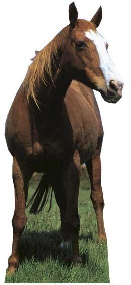 Mustang - Horse sagoma 190 cm H
