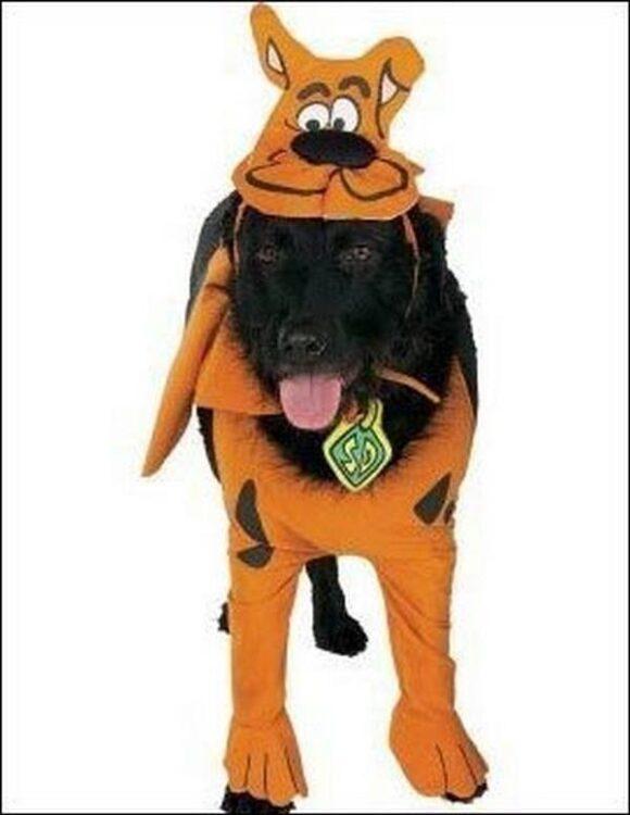 Costume pets Scooby Doo